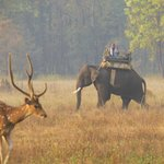 Male Spotted Deer and Asian Safari Elephant