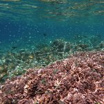  Underwater shot of the outer reef