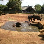 Elephants at Shangani Lodge having a bath