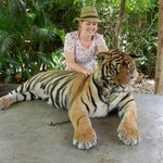Patting a tiger