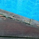  dangerous hazard around pool edge protruding screws and loose damadged worn out NOT 4*