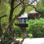 "Le ""green papaya cottage"""