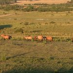  Some of Estancia Vik&#39;s beautiful horses seen from our room