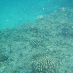 snorkeling, corals at beach at resort