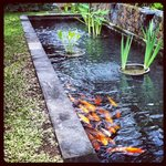  Fish pond in our villa