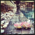  Lotus folds by the pool