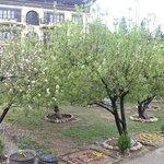 Flowering apple orchards outside the hotel