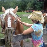 Arrowmont Stables & Cabins, LLC