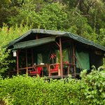 Experience the Rainforest in our Safari Tents.