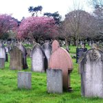 Trees in bloom contrasting with the headstones