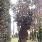 parco intorno all'hotel