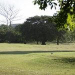 Windsor Park Mashie Course