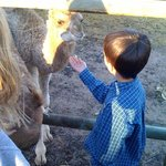  curly the camel making friends