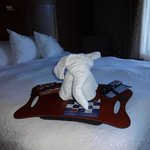  A towel animal left for our arrival!