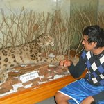 One of the displays; decline of the snow leopard