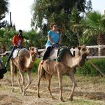 Camel Park