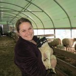  Lambing Season