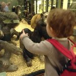  Millie and the monkeys