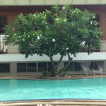  Beautiful frangipanis around the pool create a relaxing space