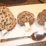  Morel Mushrooms Every Spring