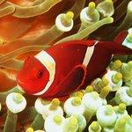 Nemo - so many different varieties to see