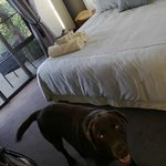 gorgeous room, complete with Dexter the lovable lab