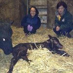  calf just been born!