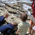 "on kids excursion ""tide pools"""