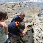 tide pool fun (right down stairs from hotel)