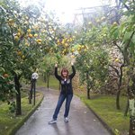  Lemon trees garden
