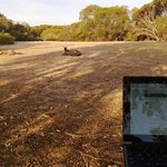 Working my MS Surface wth the Roos!