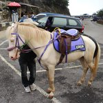  Gaga the Horse at the Volcano