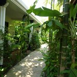  The pathway between the room, the garden, and the pool/restaurtant