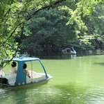 The boats at Inokashira park