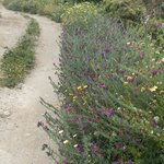 The wild flowers on the path from the aqueduct down to the beach