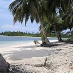 Coconuts Mentawai
