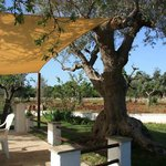 Masseria Cesarina: wonderful B&B for a weekend in Puglia! April 2013