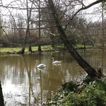 Moat and Swans