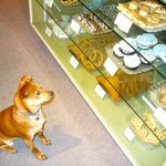 Gilligan admires the Bakery Treats Case-maybe one will fall!