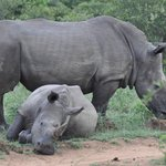  Rhino and baby