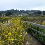  Wild flowers along the boardwalk