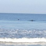 dolphins at beach club