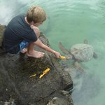  feeding turtles
