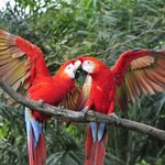 Macaw Sanctuary El Manantial
