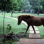  Horses mooching around on the grounds
