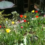  Tulips were everywhere! This was taken on the garden patio in the back yard. Gorgeous.