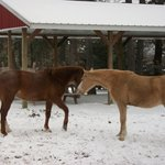play in the snow with our horses