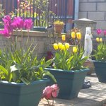 Beautiful colour in the patio Spring April 13