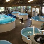 The Marine Science Centers turtle rehab clinic