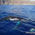  Humpback whales visit Hawaii from Nov-Apr